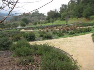 Cuvaison Winery grounds