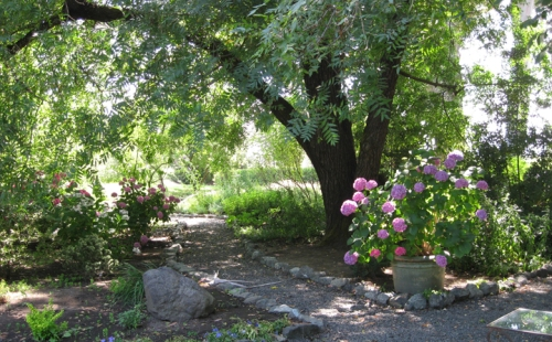 More gardens at Shady Oaks Ranch Meadowbrook